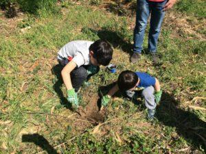 incentivar curiosidad niños cultivos